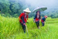 Red Dao ethnic minority in Vietnam. HA GIANG , VIETNAM - SEP 14 : Women from the Red Dao minority in a village near Ha Giang in Vietnam on September 14 2018. The royalty free stock images