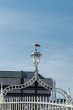 Ha penny Bridge, Dublin. Famous dublin landmark ha penny bridge ireland (offically Wellington Bridge). Seagull on a lamp Stock Photos