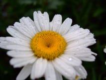 Ha piovuto nel giardino fotografie stock libere da diritti