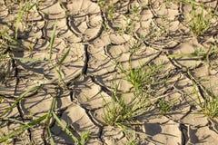 Ha screpolato una terra asciutta e un'erba verde sotto il sole caldo immagini stock