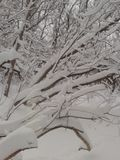 Ha svegliato ad una terra di meraviglia dell'inverno Immagini Stock Libere da Diritti