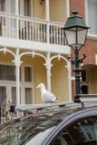 Haag branco do antro dos animais selvagens da vida uma da janela do balcão da lanterna de Haia do dutch da rua do telhado do carr Fotos de Stock Royalty Free