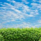 Haag en blauwe hemel Stock Fotografie
