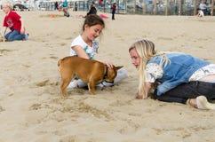 Haag Nederländerna - Maj 8, 2015: Barn som spelar på stranden, Scheveningen område i Haag fotografering för bildbyråer