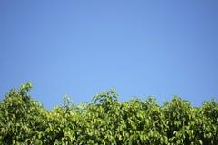 Haag tegen Blauwe hemel Stock Afbeelding
