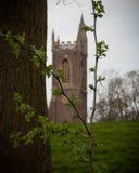 Haagdoorn en een silhouet van een kathedraal stock fotografie