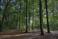 Haagse Bos Stock Photo