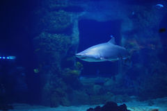Haai in de pool Stock Foto's