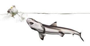 Haai die een Meeuw jagen Royalty-vrije Stock Afbeelding
