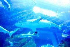 Haai in een aquarium doubai Stock Fotografie