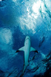Haai en hemel Stock Foto's