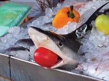 Haai in ijs royalty-vrije stock afbeelding