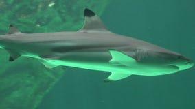 Haai Marine Life And Predatory Animals stock videobeelden