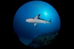 Haai in oceaan Stock Fotografie
