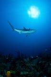 Haai in oceaan Stock Foto's