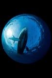 Haai in oceaan Royalty-vrije Stock Fotografie