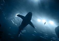 Haai onderwater in blauw stock afbeelding