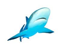Haai op witte achtergrond royalty-vrije stock foto's