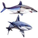 Haai wilde vissen in een geïsoleerde waterverfstijl vector illustratie