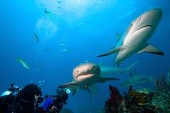 Haaien royalty-vrije stock foto