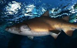 haaien Stock Foto's