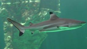 Haaien en Roofdieren van de Diepe Oceaan stock footage