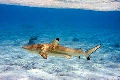 Haaien over een koraalrif bij oceaan Stock Fotografie