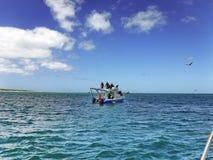 Haaikooi het duiken boot royalty-vrije stock foto