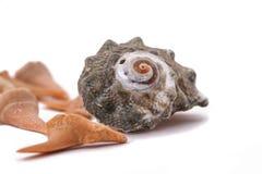 Haaitanden en oude shell op de witte achtergrond royalty-vrije stock afbeeldingen