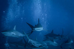 Haaiverhaal stock foto's