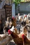 Haan en kip als nieuw jaarsymbool Royalty-vrije Stock Afbeeldingen