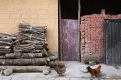 Haan en Kip die naar huis terugkomen Stock Afbeelding