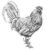 Haan, realistische schets van de kippen de hand getrokken vectorillustratie stock illustratie