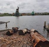 Haanse Schans väderkvarnar Royaltyfri Foto