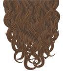 Haar-Vektorillustration der Locken braune Stockfotos