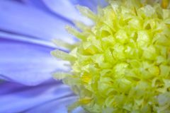Haard van een purpere bloem stock afbeeldingen