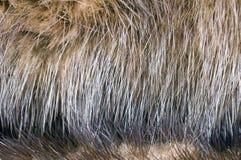 Haare auf Nerzmantel Lizenzfreie Stockfotografie