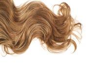 Haarfragment über dem Weiß Stockbilder