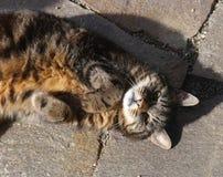 Haarige Haustiere der süßen Hauptkatzenfreundschaft Stockbild