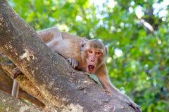 Haariger Affe Browns, der einen Baum mit dem Brüllen klettert Lizenzfreies Stockbild