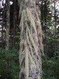 haariger Baum Stockbilder