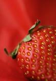 Haariges Erdbeeremakro Stockfoto
