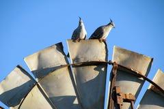 Haarknotjeduiven bovenop windmolenblad worden neergestreken in de recente middagzon die royalty-vrije stock afbeelding