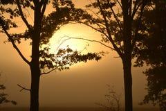Haarlok met zon Stock Afbeelding