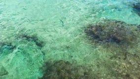 Haarscharfe Seeuferkoralle und -felsen, die Gesamtlänge verschiebt stock video footage
