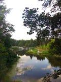 Haarscharfer Fluss umgeben durch Bäume vom Wald lizenzfreies stockfoto