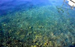 Haarscharfes Wasser voll von Fischen Stockbilder