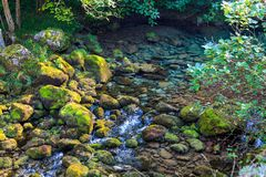 Haarscharfes Wasser von Gebirgsfluss kommend vom Tauwetter Nationalpark Picos de Europa lizenzfreies stockbild