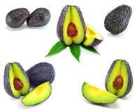 Haas Avocadoauswahl lizenzfreies stockfoto
