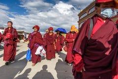Haast vrouwelijke lama's Royalty-vrije Stock Foto
